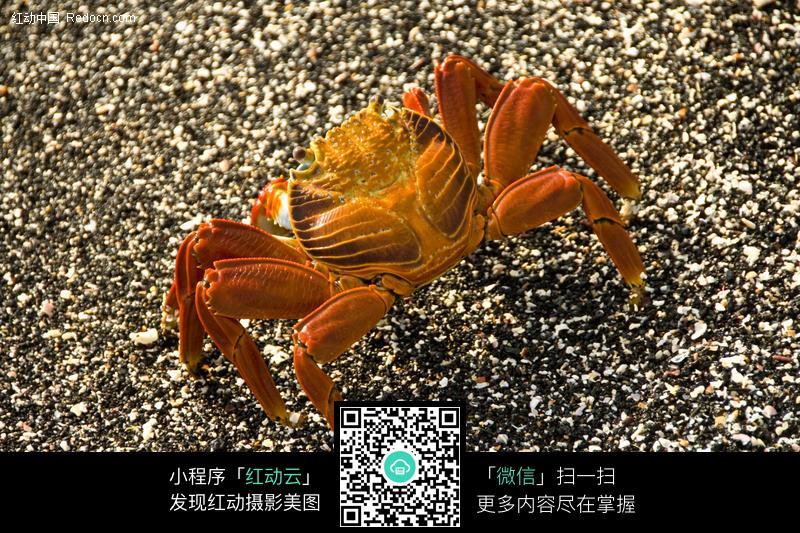 螃蟹图片_水中动物图片