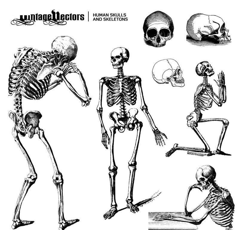 手绘动漫学习人体