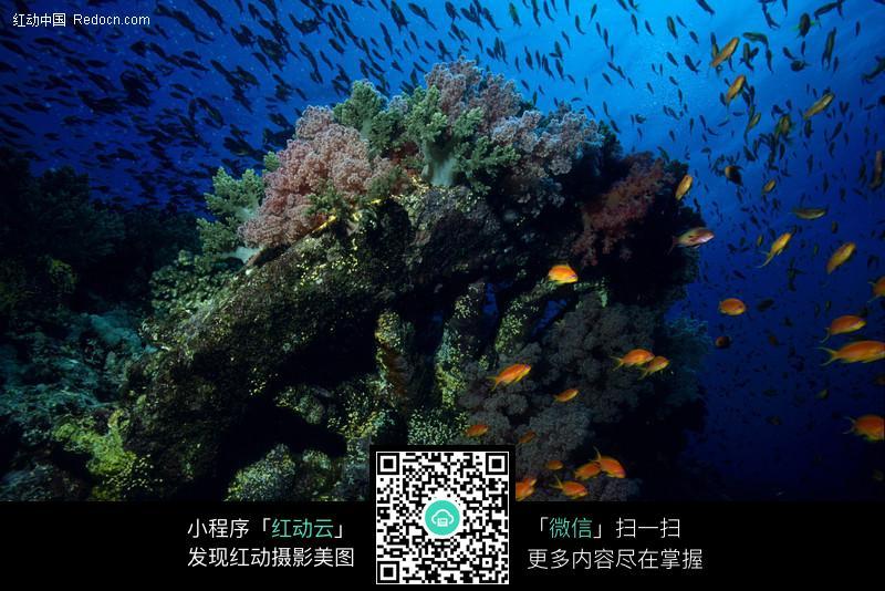 深海鱼群高清壁纸
