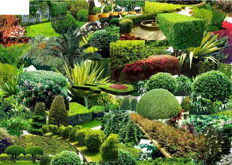 树 树木 灌木 园林 景观 园林景观 花坛 园林设计 psd素材 psd分层