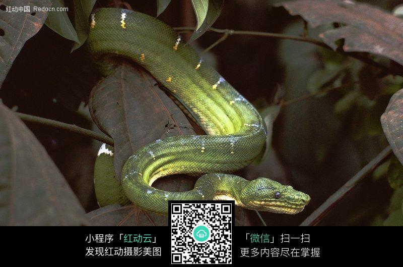 蛇类高清图片_陆地动物图片