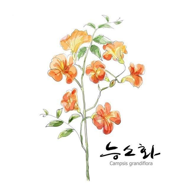 韩国手绘花卉图片_植物