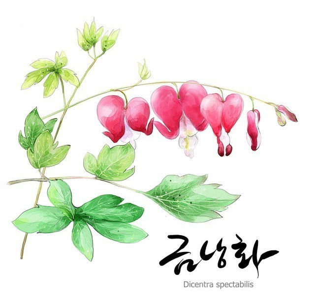 韩国手绘花朵
