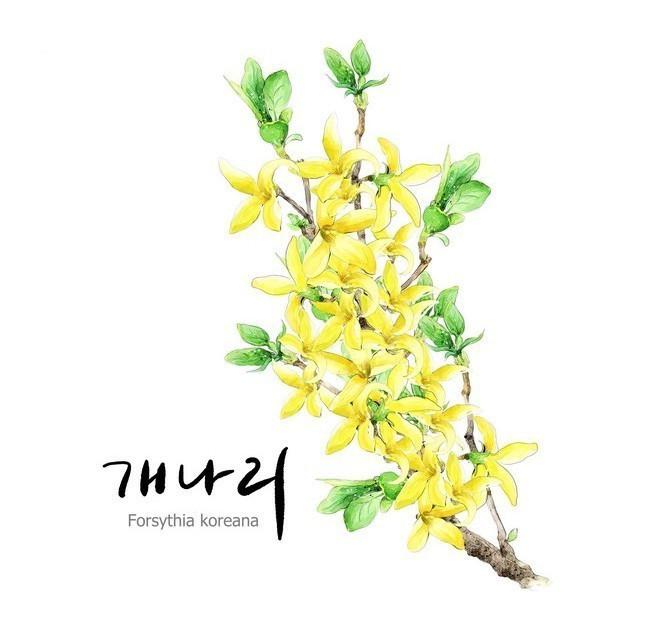韩国花卉插画图片