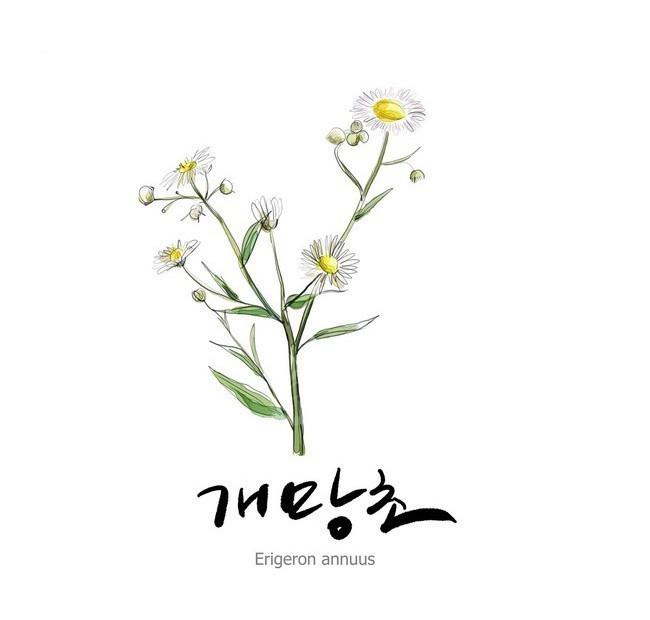 漂亮的手绘花卉图psd免费下载_植物素材