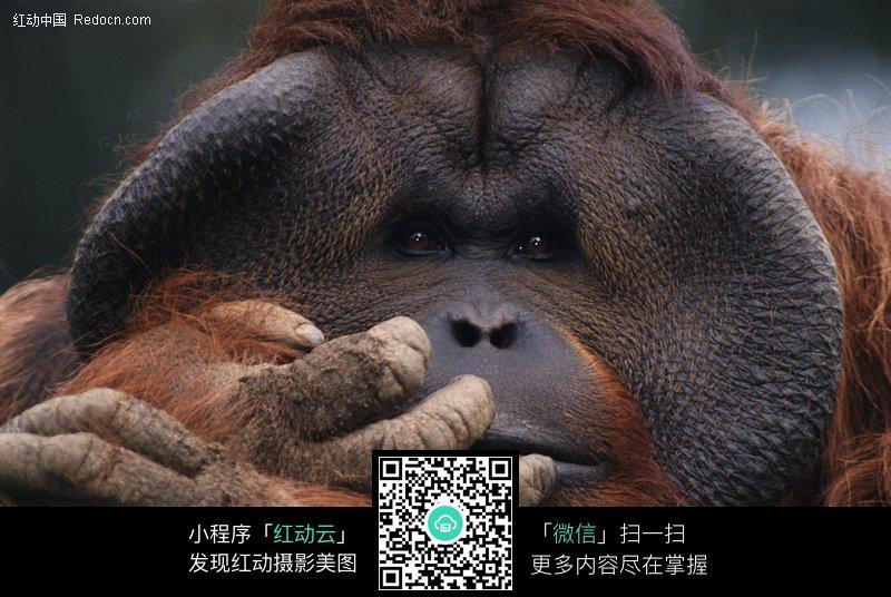 狒狒近距离特写_陆地动物图片
