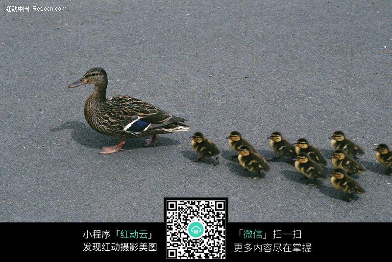 动物头饰手工制作鸭子