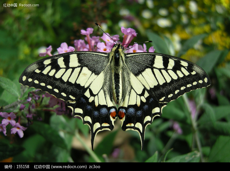 花上休憩的蝴蝶