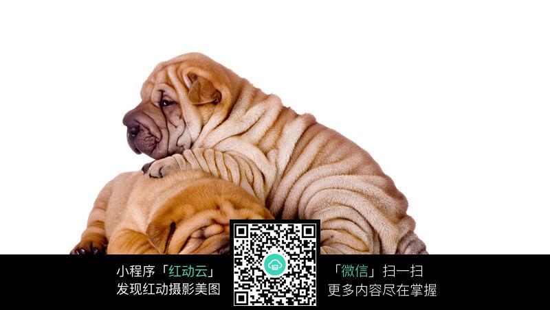 沙皮狗0_0起拍可爱的紫砂茶宠沙皮狗大兴收藏与茶艺