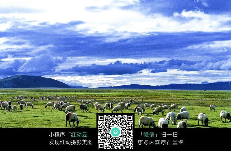 草原上的 羊群 图片
