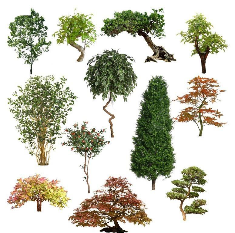 树素材图片_植物