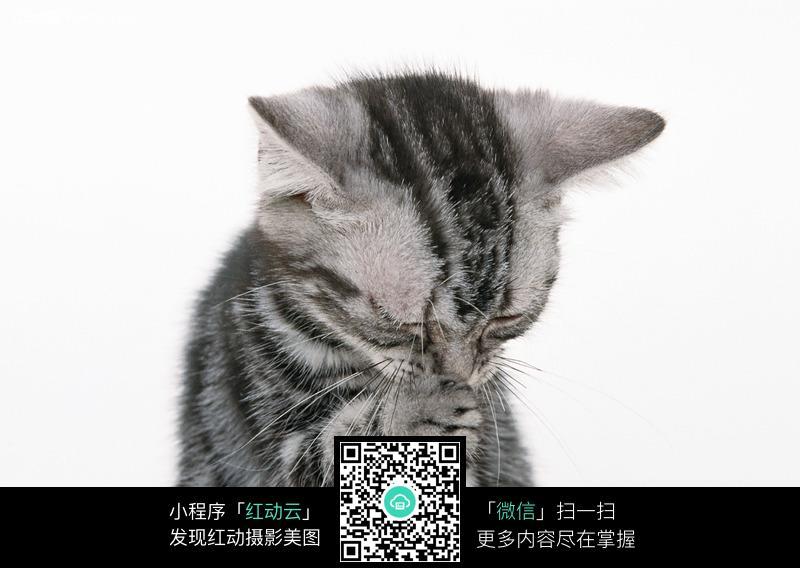 免费素材 图片素材 生物世界 陆地动物 开心猫