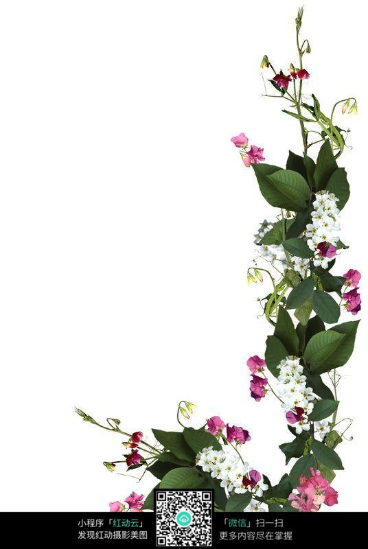 免费素材 图片素材 背景花边 边框相框 植物花边