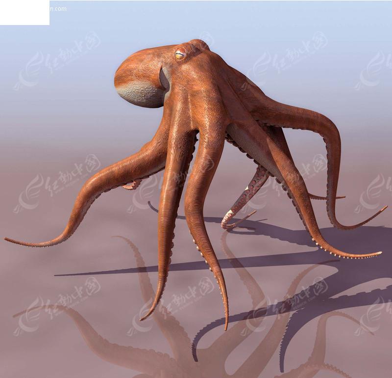 3d章鱼模型