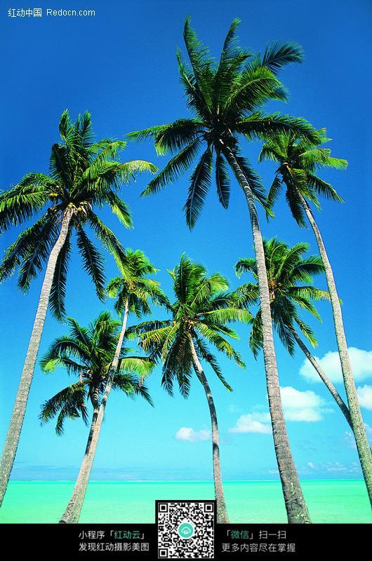 五棵椰子树图片_海洋海边图片