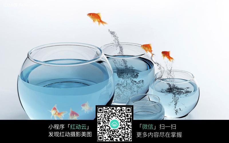鱼缸间跳跃金鱼图片_水中动物图片
