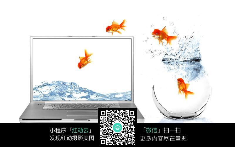 跳进电脑显示器的金鱼图片_水中动物图片