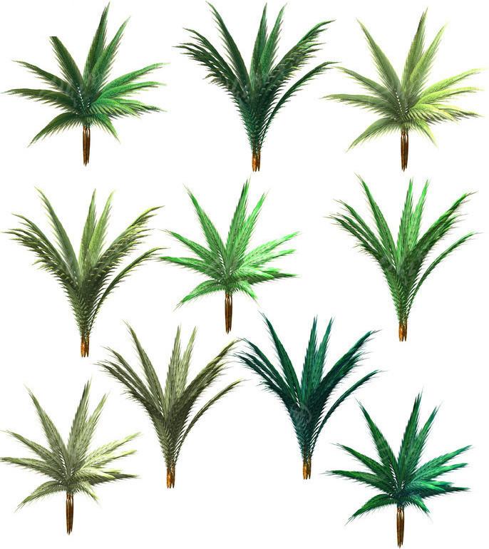 手绘水椰图片素材_植物