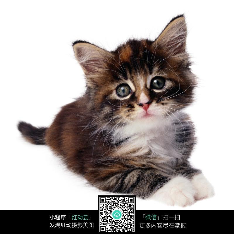 趴着的可爱小猫