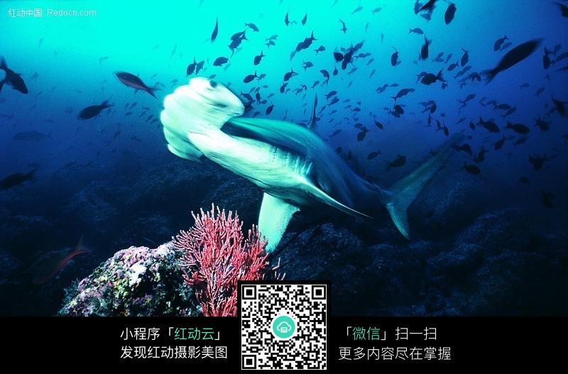 壁纸 动物 海底 海底世界 海洋馆 水族馆 鱼 鱼类 桌面 800_527