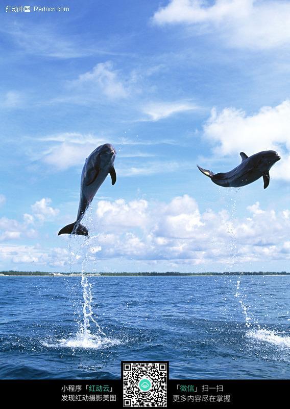 空中跳跃的海豚_水中动物图片