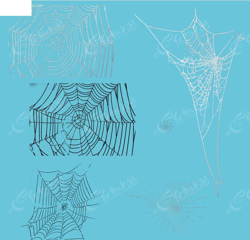 蜘蛛网素材psd免费下载_其他图片