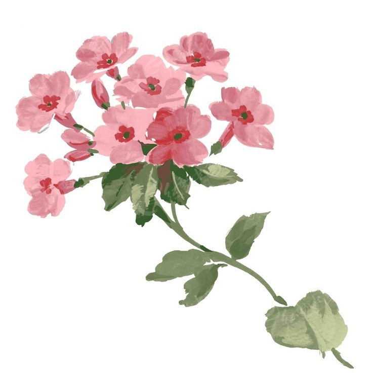 韩国手绘psd花朵素材