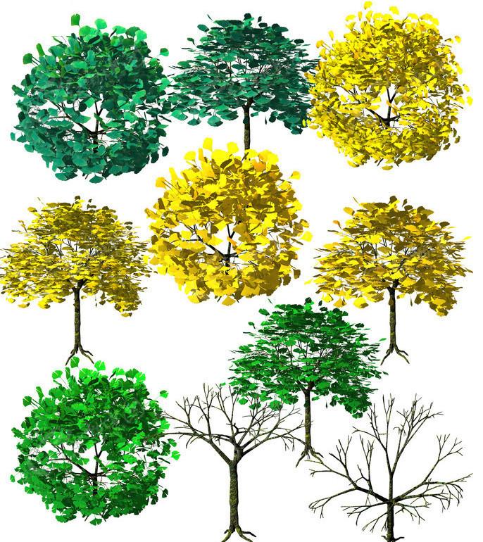 手绘银杏树素材图片