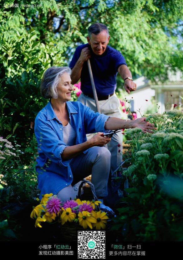 打理花园的外国老人图片