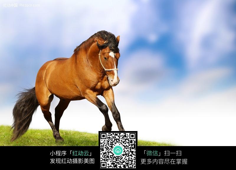 免费素材 图片素材 生物世界 陆地动物 奔跑的棕色俊马