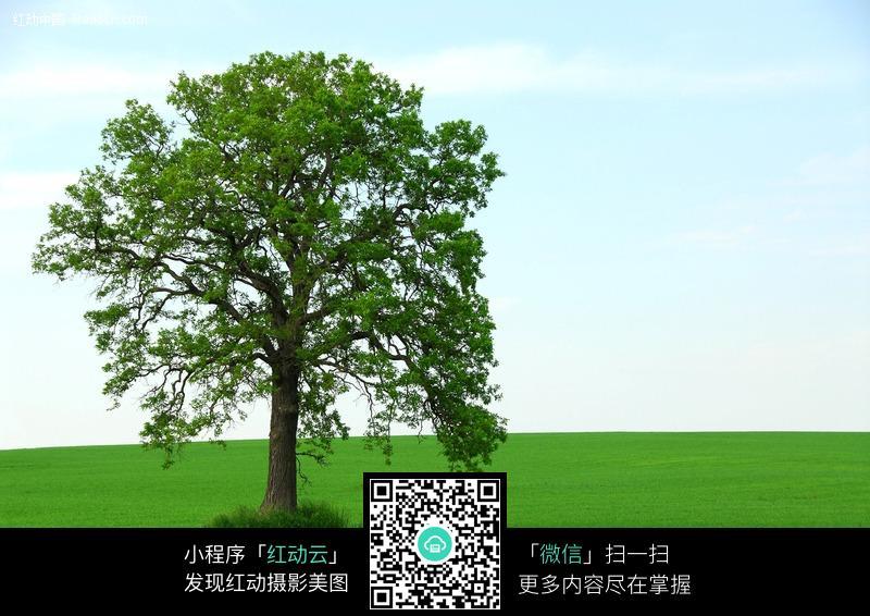 绿色草地上的大树图片