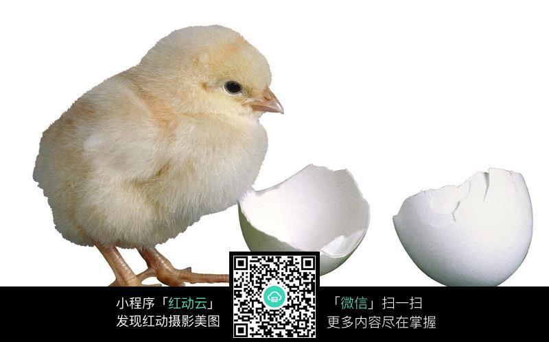 鸡蛋上画卡通画图