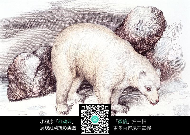 手绘北极熊图片_动物图片