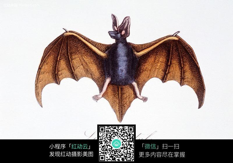 手绘蝙蝠_动物图片