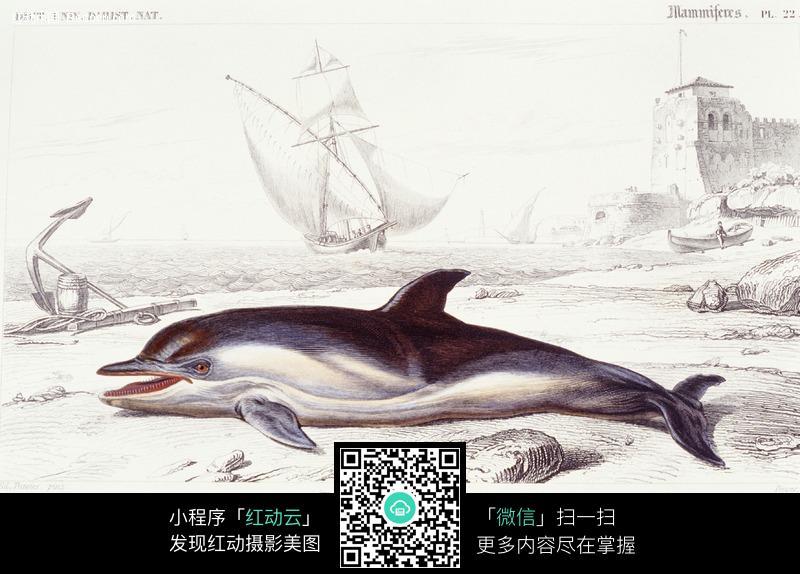 手绘海豚图片