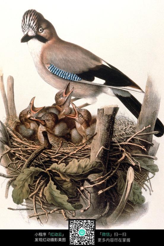 手绘鸟喂雏鸟 鸟窝 鸟巢
