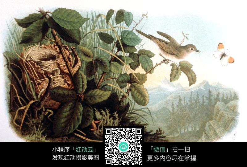 手绘鸟捉昆虫图片_动物图片