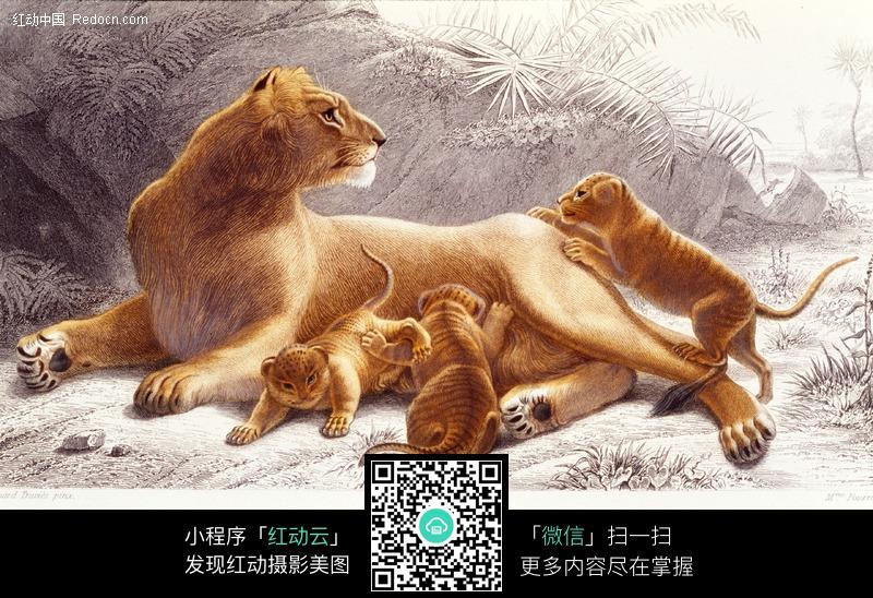 手绘母狮 虎狮兽 猫科动物