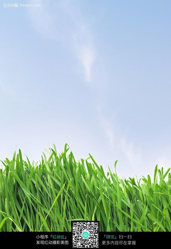 啵啵网青草_绿色的青草叶子