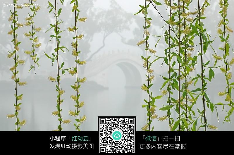 江南的春天图片