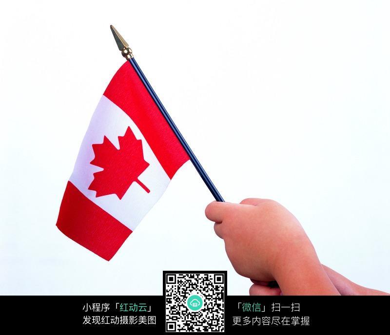 拿着加拿大国旗的小手图片