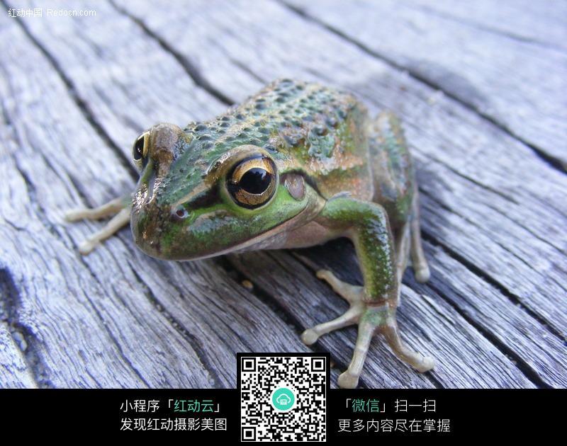 趴在木板上的青蛙_陆地动物图片