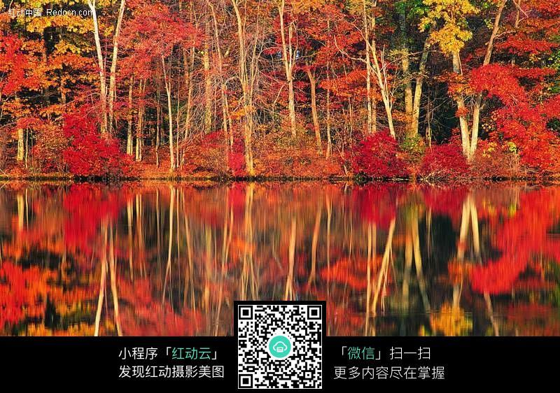 水中树林倒影图片