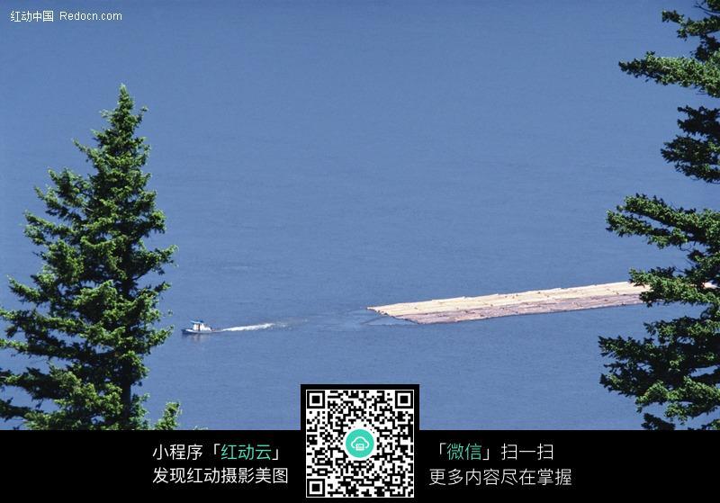 海边的松树图片_自然风景图片