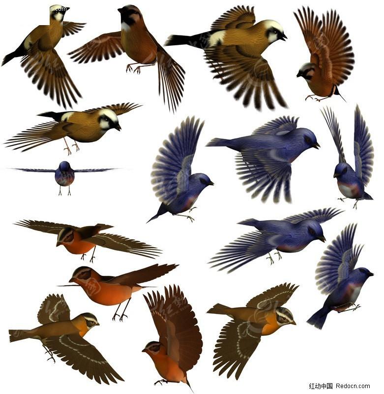 免费素材 psd素材 psd分层素材 动物 3d小鸟分层素材  请您分享: 素材