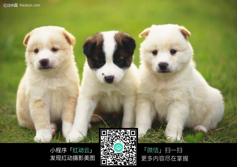 梦到有三只狗的房间