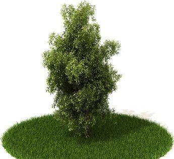3d精美树木模型图片