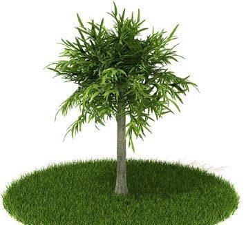 3dmax树木模型