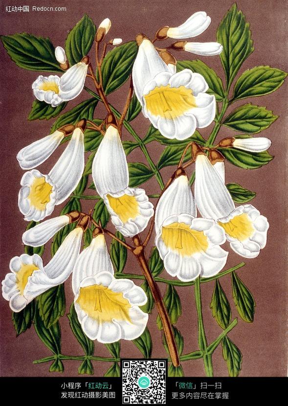 手绘白色花卉