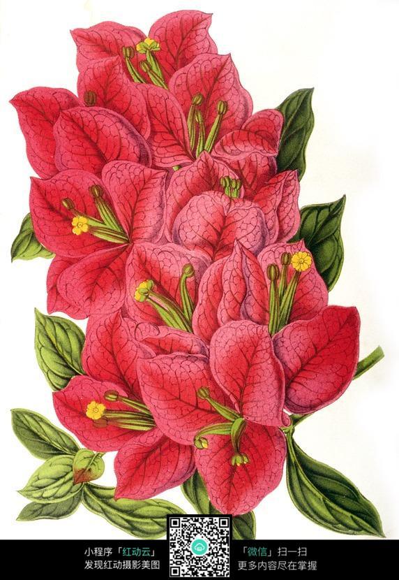 手绘红色室内植物图片